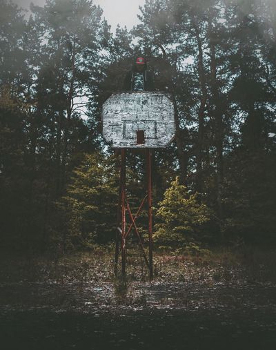 Tree Day Outdoors Communication No People Nature Forest Road Sign Tranquility Basketball Hoop Landscape Basketball - Sport Sky EyeEm Best Shots The Week On Eyem EyeEm Best Edits EyeEm Gallery The Great Outdoors - 2017 EyeEm Awards Fog Foggy Abandoned Places Nature
