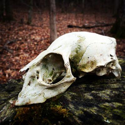 Death One Animal Animal Bone