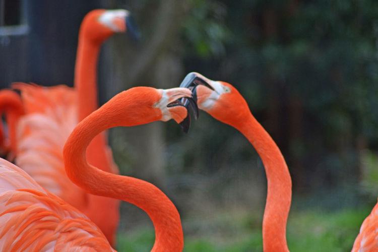 Animals Beauty