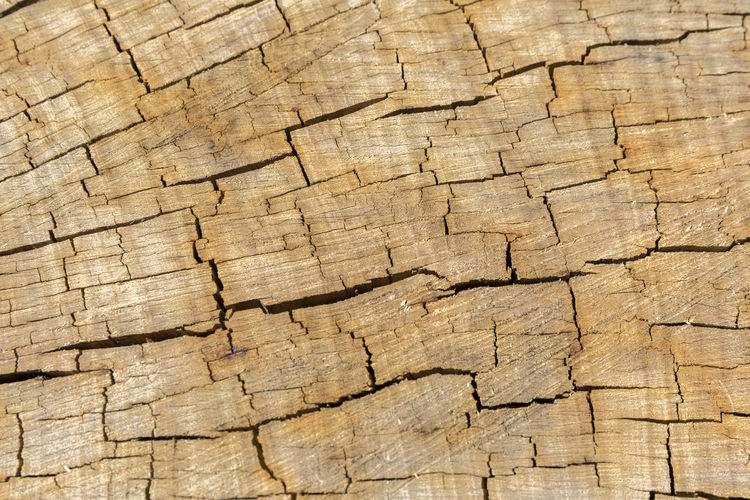Backgrounds Brown Close-up Cracked Day Full Frame Hardwood Lumber Industry Nature No People Outdoors Pattern Textured  Timber Tree Tree Ring Tree Stump Wood - Material Wood Grain