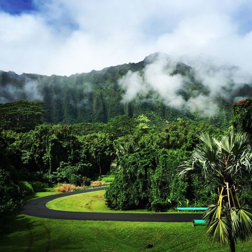 Botanical Gardens Thisiswhereirun Koolaus Mountain View Oahu, Hawaii Working Out Gettingfit Runningshot