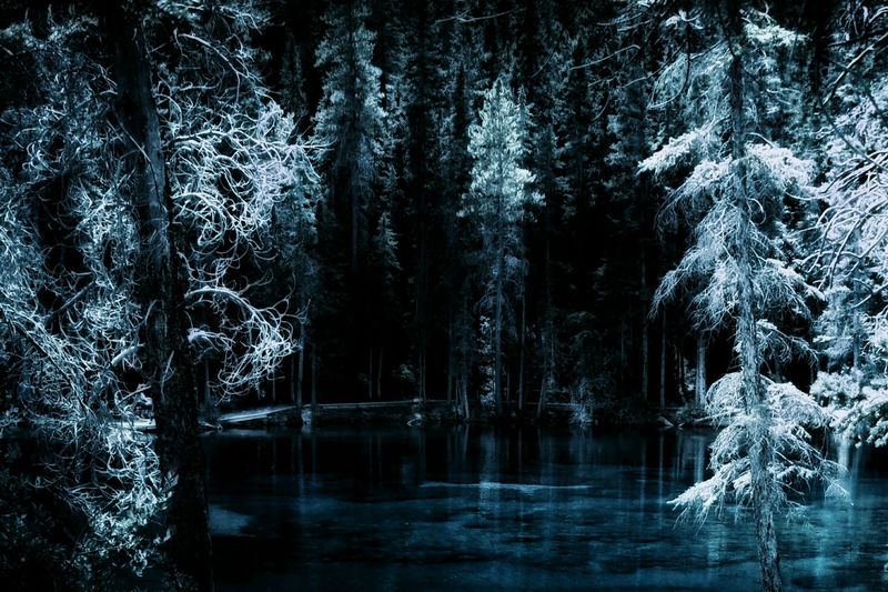 good night :) Canadian Rockies  Crystal Clear Waters Dark Forest Fresh Air Frost Grassi Lakes Lake Mountain Addict Mountains Nature Outdoors Reflection Snow Tree Turquoise Water Water