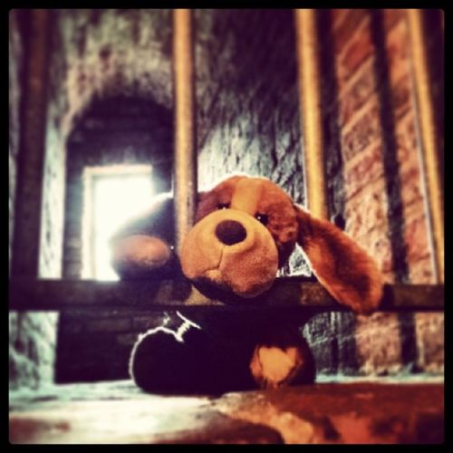In Puppy Jail ? Noo, just Martinikerk Church tower... beagle antique history hipster cute picoftheday Groningen netherlands stuffedanimals alternative indie dungeon medieval