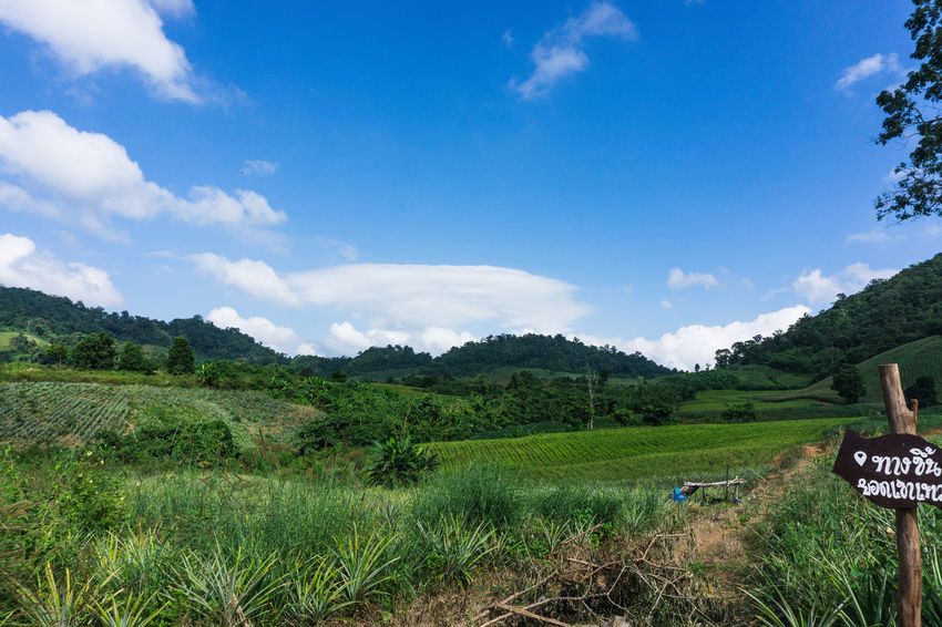 Sky Landscape Environment Plant Grass Land Nature Field Cloud - Sky Sign Communication Beauty In Nature Scenics - Nature Growth Tree Green Color Hill No People Tranquility Tranquil Scene Outdoors