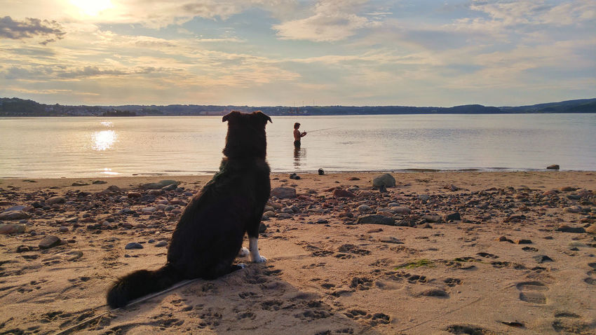 Patience... Saguenay, Québec, Canada The Week On EyeEm Animal Themes Beach Beauty In Nature Cloud - Sky Day Domestic Animals Horizon Over Water Mammal Nature No People One Animal Outdoors Pets Sand Scenics Sea Shore Sky Sunset Tranquil Scene Tranquility Water Pet Portraits EyeEmNewHere Second Acts This Is Masculinity