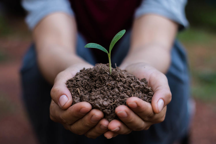 Tree Beginnings Care Close-up Fragility Growth Hands Cupped Holding Human Hand Nature New Life Outdoors Plant Planting