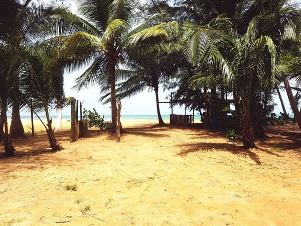 Palm Tree Tree Beach Sand Tree Trunk Sea Tranquil Scene Tranquility Shore Nature Treelined Water Branch Outdoors Beauty In Nature Sky Scenics Remote In A Row Growth