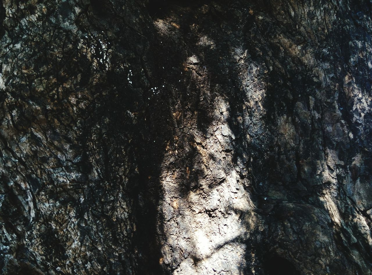 textured, tree trunk, full frame, backgrounds, nature, tree, no people, day, rough, low angle view, outdoors, bark, close-up, beauty in nature