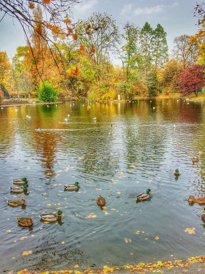 A great Autumn day in Austria . City Park in Vienna. I wish you a happy day my friends of nice pictures! ;-)