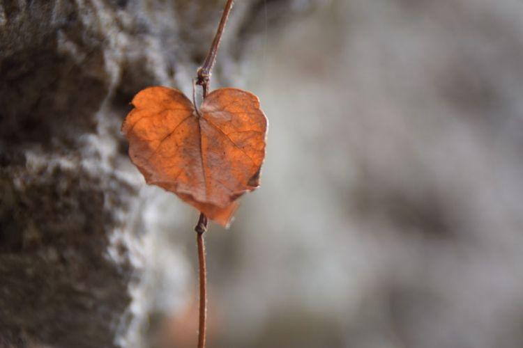 Leaf Autumn