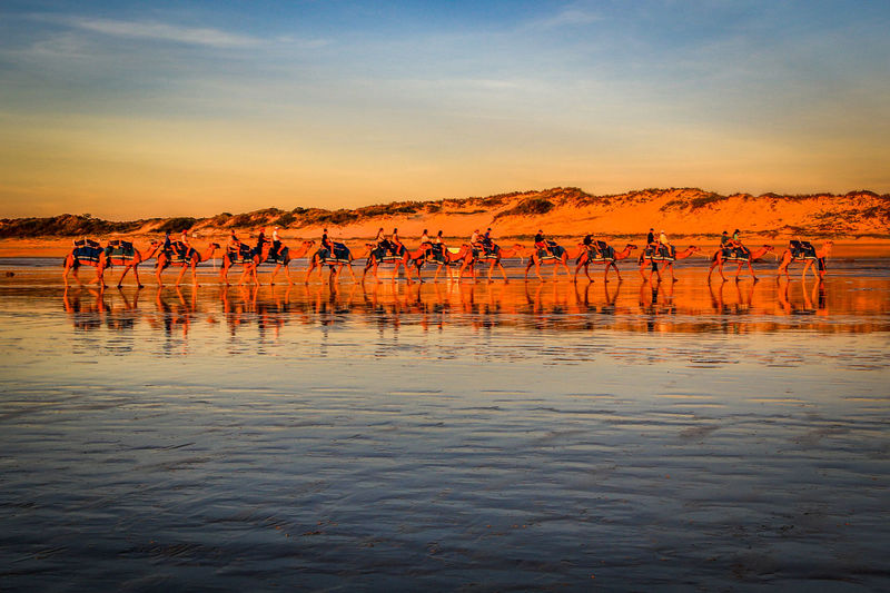 Row of camels on Cable Beach, Broome, Australia Broome, Australia Cable Beach, Western Australia Sunset_collection Travel Animal Themes Animal Wildlife Animals In The Wild Beauty In Nature Camels Day Lake Large Group Of Animals Mammal Nature Outdoors Reflection Rippled Scenics Sky Sunset Tranquility Water Waterfront The Traveler - 2018 EyeEm Awards
