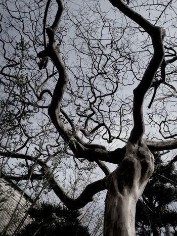 TreePorn Eye4photography