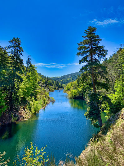 Scenic view of lake by trees against blue sky