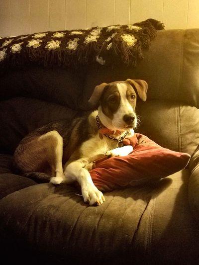 Pets Domestic Animals Indoors