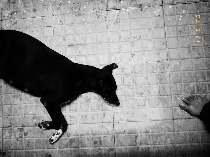 Black dog on hand against wall