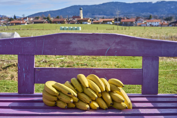 Agriculture Banana Bananas Day Fence Field Focus On Foreground Food Food And Drink Freshness Fruit Green Color Healthy Eating Land Landscape Nature No People Outdoors Vegetable Wellbeing Yellow