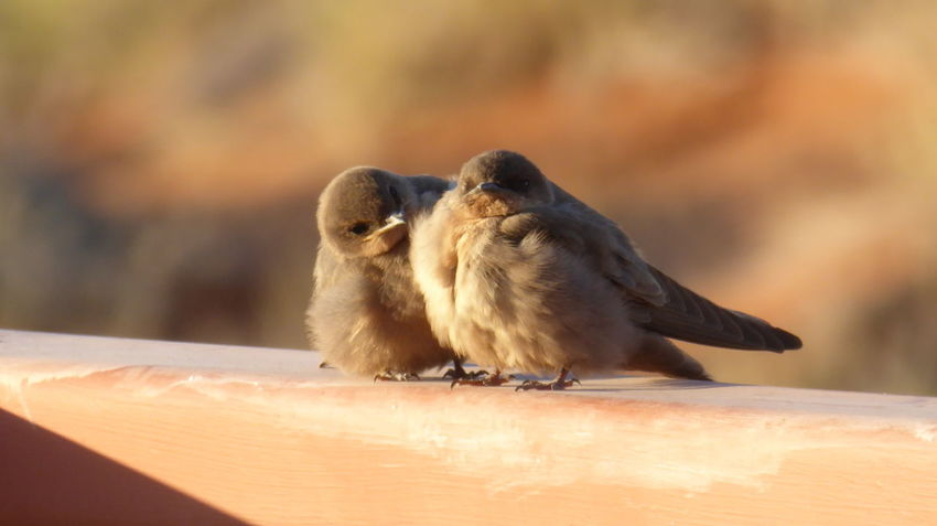 Emotions Animal Themes Animals In The Wild Bird Focus On Foreground Little Bird Namib Naukluft National Park Nature Togetherness