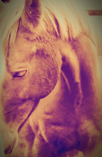 For sale Horse