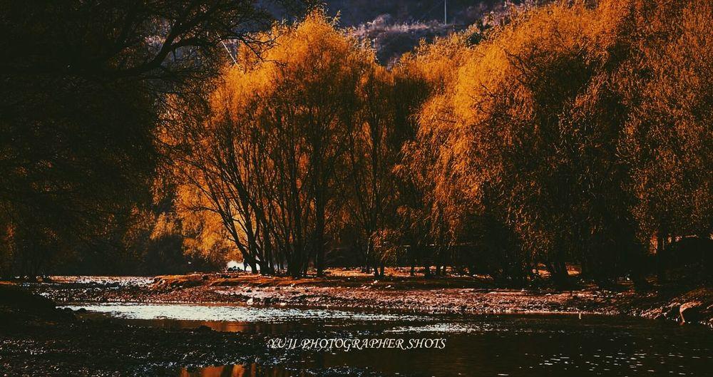 autumn Autumn Fall Landscape Landscape_photography River Riverside Tree Tree_in_autumn