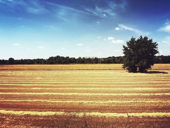 Plant Sky Land