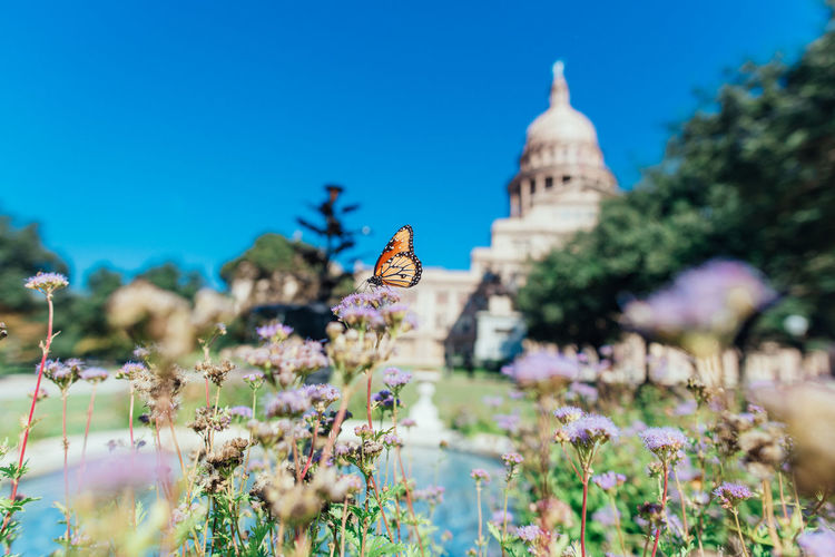 Sunny day at Texas Capital, Austin. Austin Texas Texas Capitol Architecture Beauty In Nature Belief Blue Sky Building Exterior Built Structure Butterfly Flower Flowering Plant Fragility Freshness Growth Nature No People Outdoors Place Of Worship Plant Religion Selective Focus Sky Spire  Spirituality Vulnerability