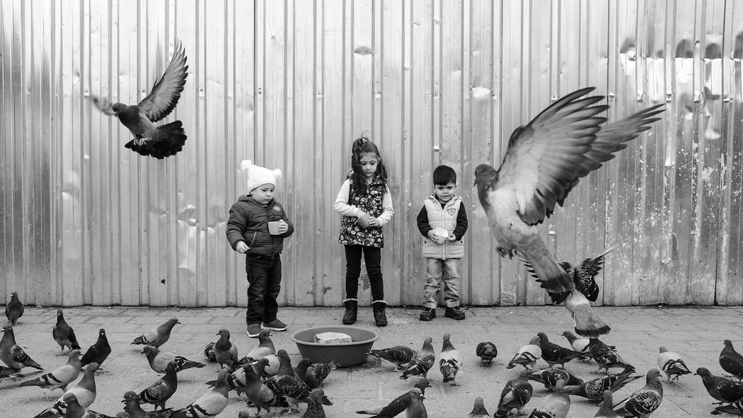 First Eyeem Photo Birds Childeren People Watching