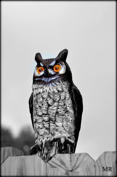 Whoo Dat Mattroeartist Neworleans Owl Statue Streetphotography