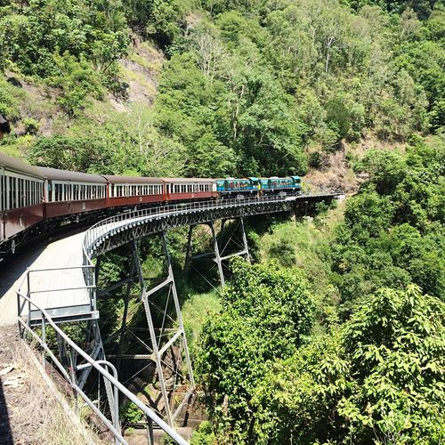 Tree Bridge - Man Made Structure River Growth Transportation Outdoors Mode Of Transport Connection Green Color Travel Destinations Day Plant No People Nature Water Architecture Railway Bridge Horizontal Train Railway