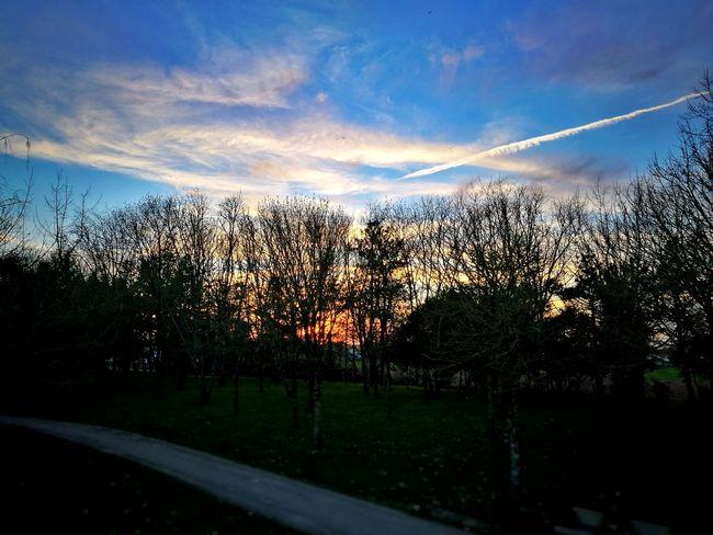 Sky Sunset Sunlight Tree Dramatic Sky Silhouette No People Cloud - Sky Nature Outdoors Day Vendée France🇫🇷 Leica Lens Huawai P9
