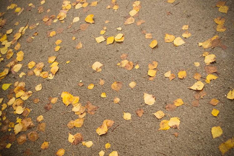 Asphalt Fall Fall Beauty Fall Down Golden Hour Leaves On Roa Leaves🌿 Many Road