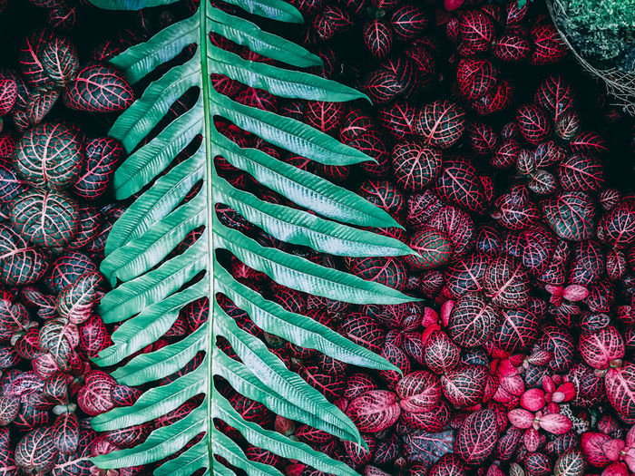 Garden Tropical
