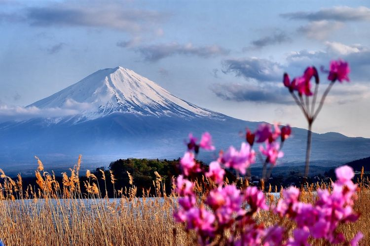 Pink Flowers Growing Against Snowcapped Mountain