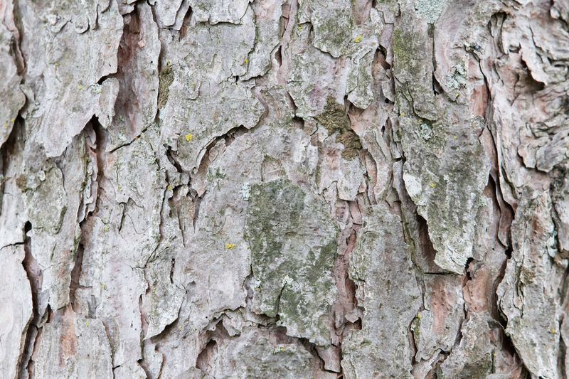 Backgrounds Bark Built Structure Close-up Day Full Frame Knotted Wood Nature No People Outdoors Pattern Pine Bark Rough Textured  Tree Tree Trunk Weathered Wood - Material