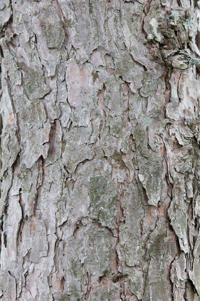 Architecture Backgrounds Bark Built Structure Close-up Cracked Day Full Frame Industry Nature No People Outdoors Pattern Pine Bark Rough Textured  Tree Tree Trunk Weathered Wood - Material