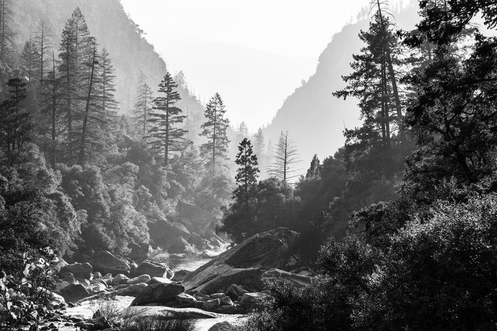 Some river in the Yosemite valley. Great light and some fog. Ansel Adams Inspired AnselAdams Backlight Backlit Beauty In Nature Day Fog Foggy Forest High Contrast Mountain Mountains Nature No People Outdoors River Scenics Sky Stones Tree Yosemite Yosemite National Park Yosemite Valley California Dreamin