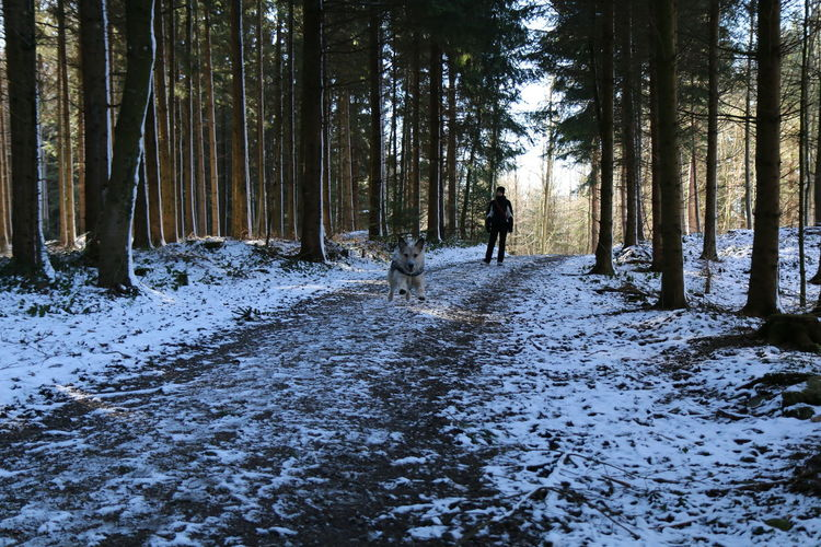 Adventure Buddies Cold Temperature Dog Forest He Loves The Snow Outdoors Snow Taking Photos Walk Walking Winter