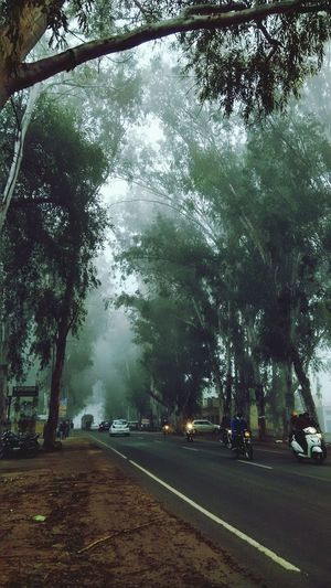 Tree Weather Nature Rain Beauty In Nature Outdoors Rainy Season Fog Sky Rainfall Shades Vehicle Busy Road