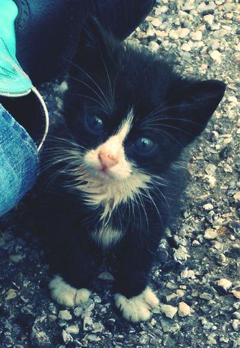 Kitty!  Kitten #adorable My Kitty
