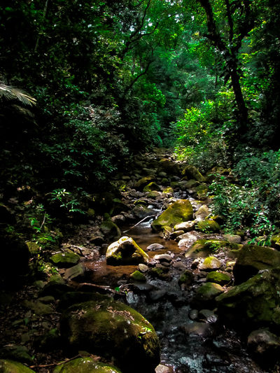 Stream in the jungle of Benito Juarez natural reservation, near Catemaco, in Veracruz, Mexico. Adventure Beauty In Nature Green Color Jungle Natural Reserve Nature No People Outdoors Relaxation Rocks Rocks And Water Stream