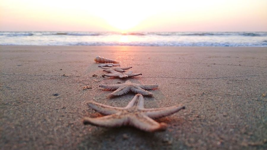 Close-up of star fishes on sand at beach during sunset