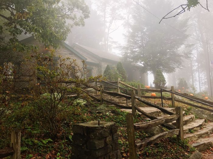 Tranquil Scene Mountain Outdoors Scenics Landscape Forest Appalachian Trail Appalachian Mountains Blood Mountain Shelter Fog Autumn Pumpkins Tranquility Foggy Weather Landscape_Collection Mysterious Nature No People Beauty In Nature Sky Growth Point Of Interest Georgia