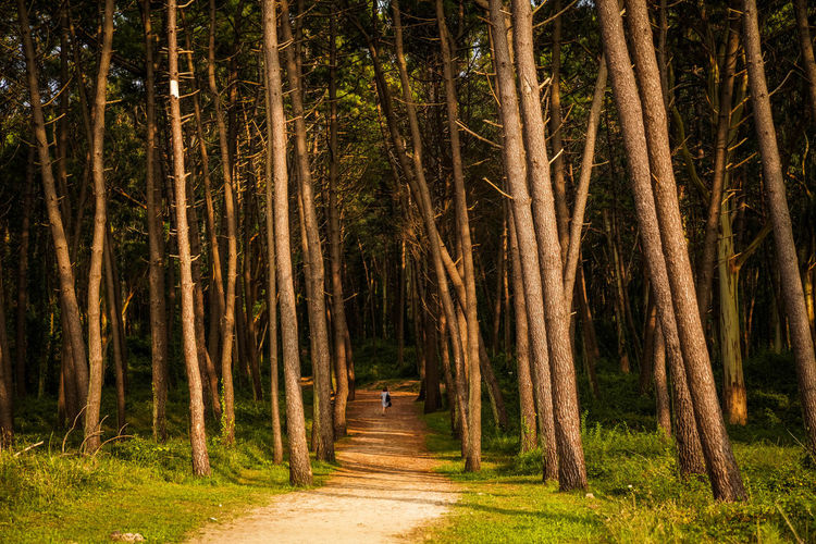 Woman Walking Amidst Trees In Forest