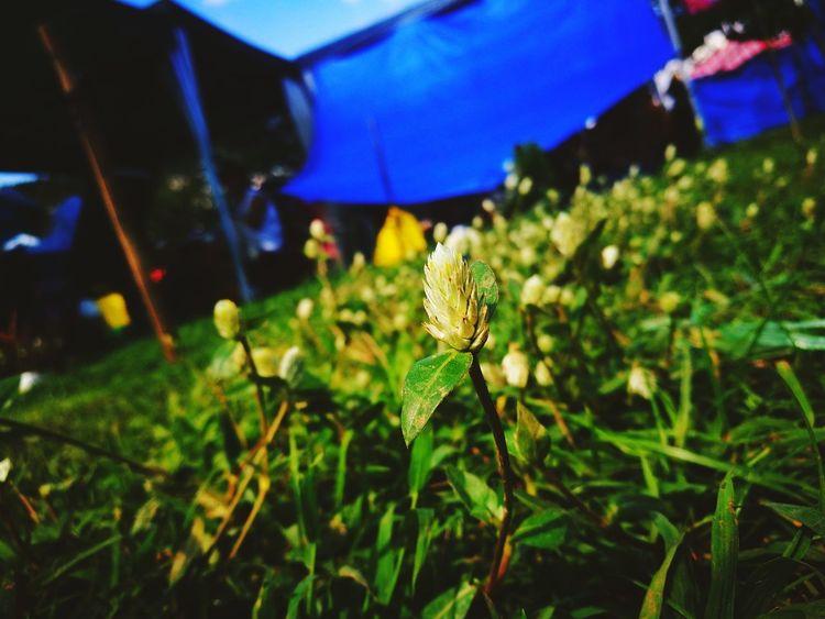 Insight Viewscape Wild Flower Head Flower Buds Wilderness Wild Flowers Outdoor Photography Phonetography Green Green Green!