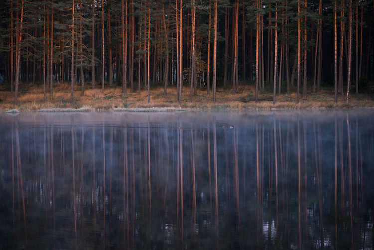 Trees reflecting on calm lake at forest