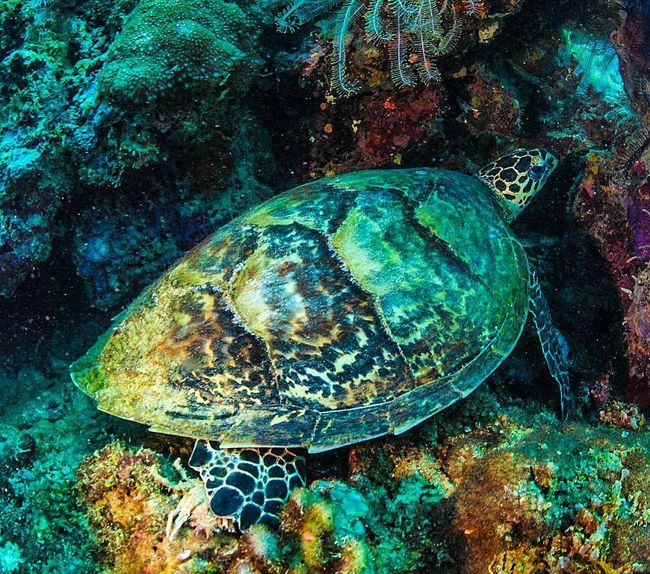Turtle Divetrip UnderSea Scuba Diving No People Sea Life UnderSea Underwater Underwaterlife Animal Themes Undewaterseaworld Divelandscape, Divestreetoghrophy, Cityscape, Adventure Underwater Photography EyeEmNewHere Breathing Space The Week On EyeEm Investing In Quality Of Life Your Ticket To Europe