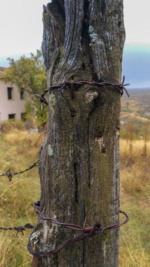 Close-up of barbed wire fence on tree trunk