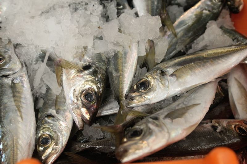 High angle view of dead fishes with ice at market stall