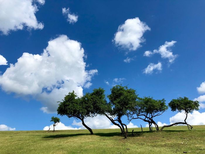 Sommerträume Sky Plant Tree Cloud - Sky Beauty In Nature Tranquility Tranquil Scene Land Field Grass No People Blue Green Color Nature Scenics - Nature