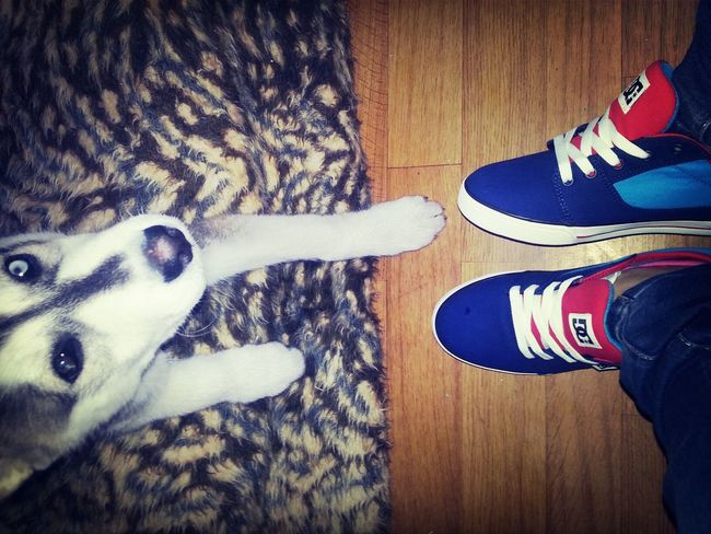 New Shoes Nice Dog Love ♥
