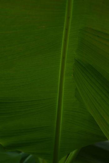 Green Green Leaves Nikonphotography Nature Photography EyeEm Nature Lover EyeEm Best Shots Taking Photos Tadaa Taking Photos